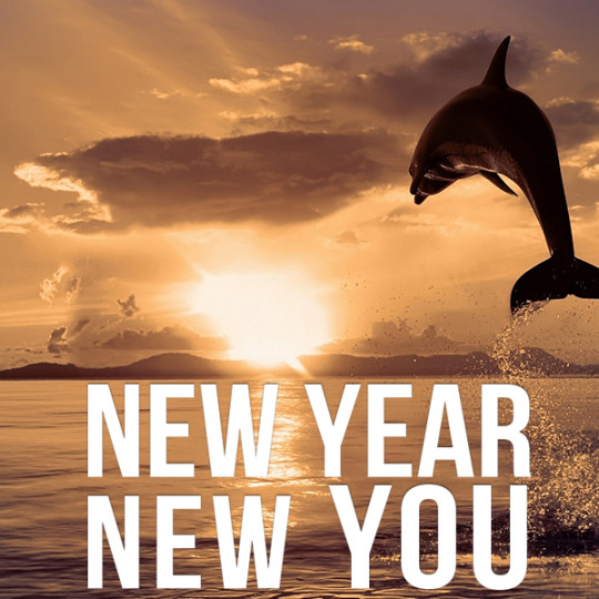 New Year – New Plan – New You!